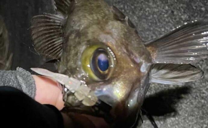 釣り最中のあるある「ヘンテコ体験」 ハリがなくても魚が釣れた?