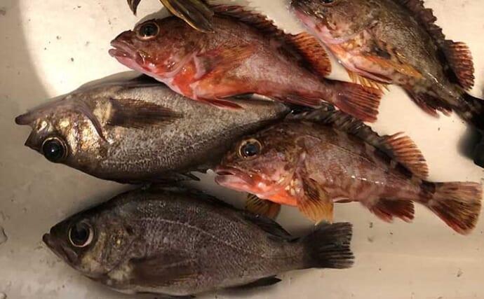 海のルアー釣りを始めよう:アジやメバル狙う「ライトゲーム」って何?