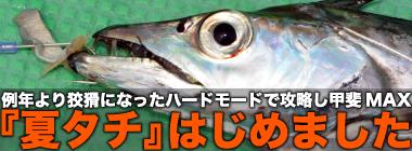 東京湾『夏タチ』シーズン開幕 例年より狡猾さアップでハードモード?