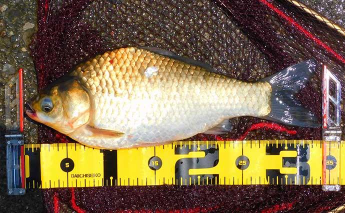 のべ竿で大物淡水魚『ハクレン』に挑戦 温排水ポイントが当たり 【荒川】