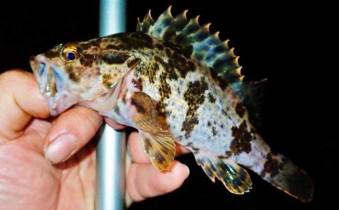 自己流釣り方で堤防釣り満喫 ジグヘッド+虫エサにノベザオでグレ狙い