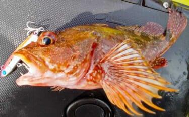 自由気ままなカヤックフィッシング 釣り方も魚種も多彩に堪能【静岡】