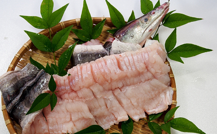 熊本の八代海でハモ漁が盛期に 関西の魚と思われがちも実は隠れた名産地