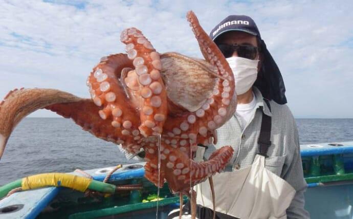 エギタコ釣りで3kg級「大ダコ」御用 今期は数より型狙い?【愛知】