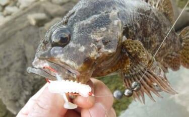 【2021関東】ルアーで『穴釣り』が楽しい 宝探し感覚で高級根魚続々