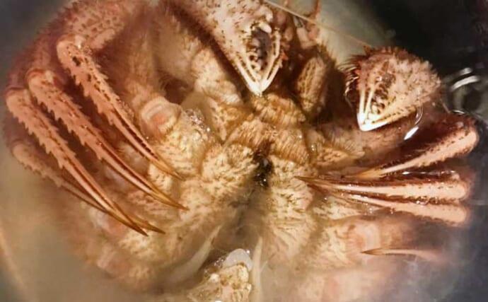 20年間月イチで毛蟹を食す蟹愛好家が教える「活毛蟹の美味しい茹で方」