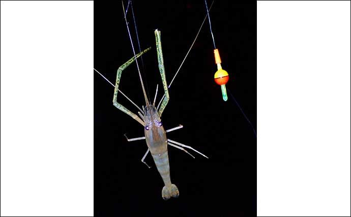 夜に楽しむテナガエビ釣りで27匹 ノベザオ3本使いが奏功?【三重】