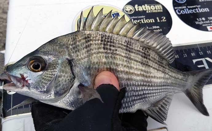 今さら聞けないフカセクロダイ釣りのキホン:「エサ取り」の有効活用術