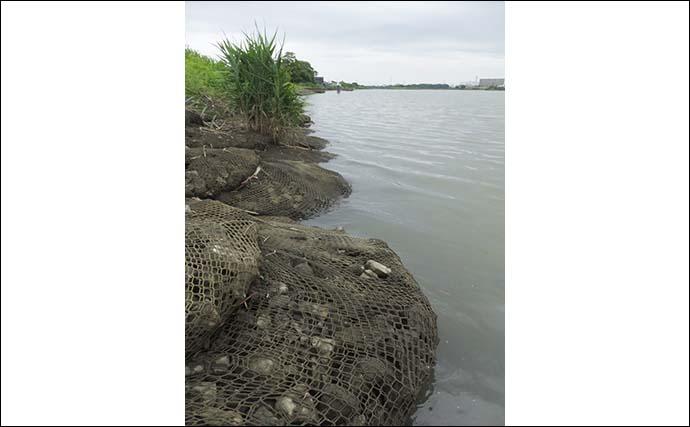 ハゼ&テナガエビの好釣り場紹介:相模川河口 足場良く家族で楽しめる