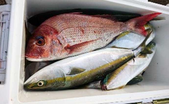【三重】沖釣り最新釣果 良型混じりで幻のシロアマダイが好調継続中