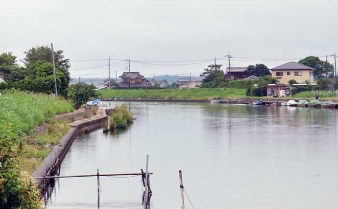 今週のヘラブナ推薦釣り場【茨城県・横利根川】