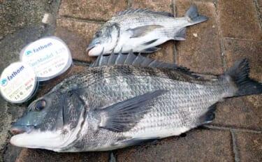 「フカセクロダイ釣り」ステップアップ:雨後の『水潮』対策4選