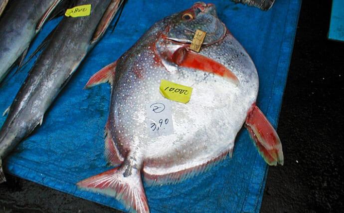 深海魚『アカマンボウ』が打ち上げられ話題 身質はまるでマグロ?