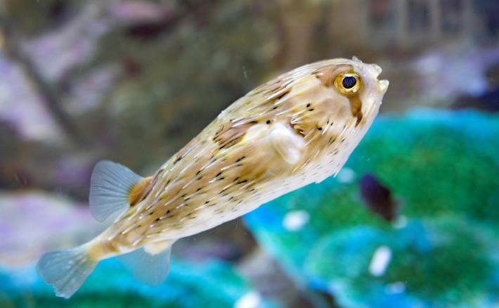 徳之島に残る伝統文化「漁なくさみ」が復活 集落単位で行う追い込み漁
