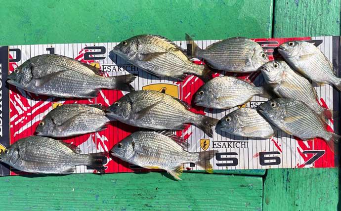 【三重】海上釣堀&カカリ釣り最新釣果 イカダ釣りでクロダイ堅調