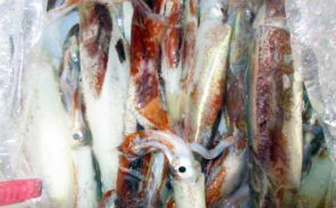 【2021茨城】夜イカ釣り入門 釣果アップのコツと最近の釣果を紹介