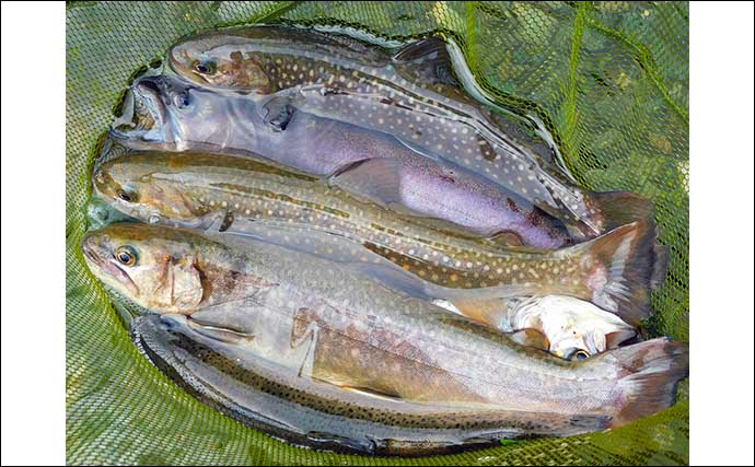 渓流エサ釣りで51cm大型ニジマスに良型イワナなど17尾【桂川・山梨】
