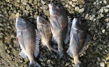 『リバーフカセ釣り』で本命チヌ40cm超え4匹 重めのまきエサが吉