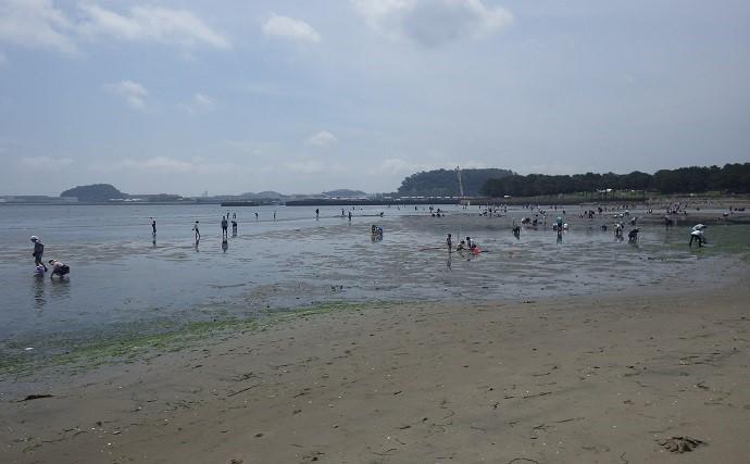 家族で潮干狩り満喫 アサリ1.7kgにツメタガイ27個【神奈川・海の公園】