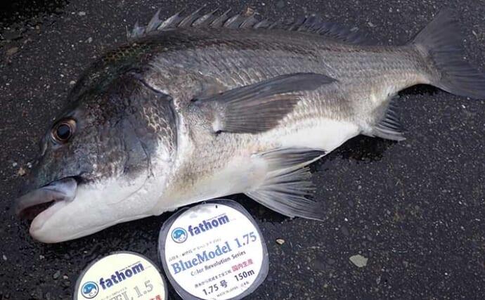 釣りターゲット『クロダイ』の魅力4選 楽しみ方の多様性が人気の理由?
