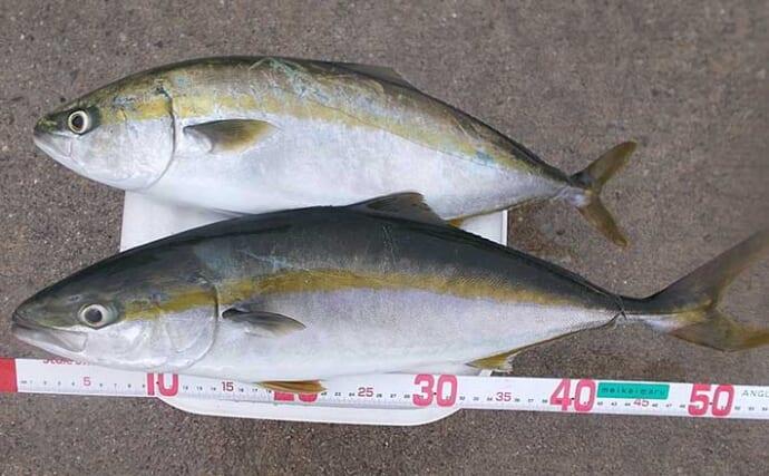 表層でシラス食す魚を狙い撃ち ボートキャスティングゲームで良型ハマチ