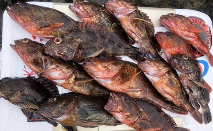 離島の磯で『ブラクリ仕掛け』アラカブ数釣りを堪能 初心者にもオススメ