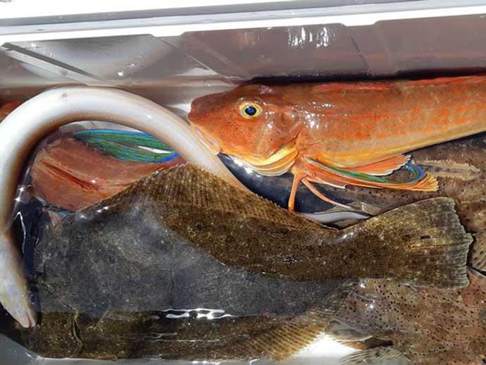 週末ナニ釣れた?沖釣り速報:外房や東京湾で『夏ビラメ』顔出し【関東】