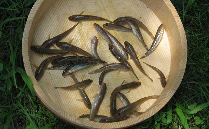 ハゼ釣り最盛期突入 1時間弱で良型交じり28匹手中【和歌山・紀ノ川】
