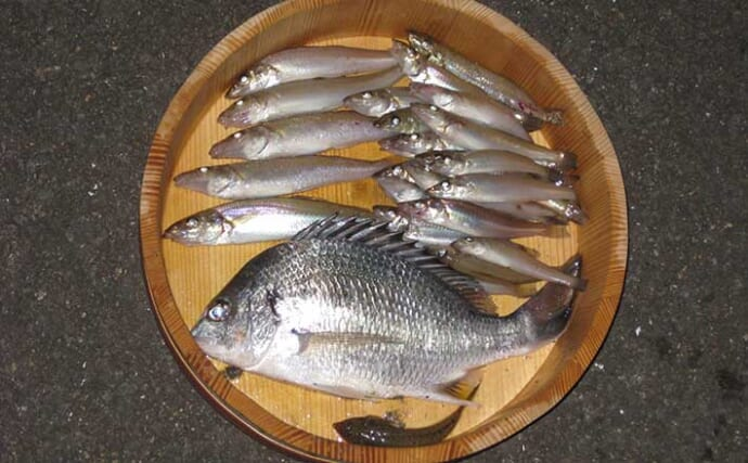 投げキス釣りで18cm頭に25匹 大バリで良型狙い撃ち【和歌山・紀ノ川】