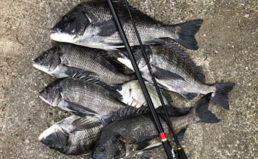 チヌ狙いリバーフカセ釣りのススメ 真夏でもエサ取り少なめ&快適釣行