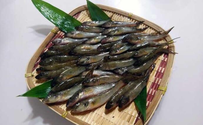 都心近郊のハゼ釣りで2時間半で良型39匹 のべ竿タックルがオススメ