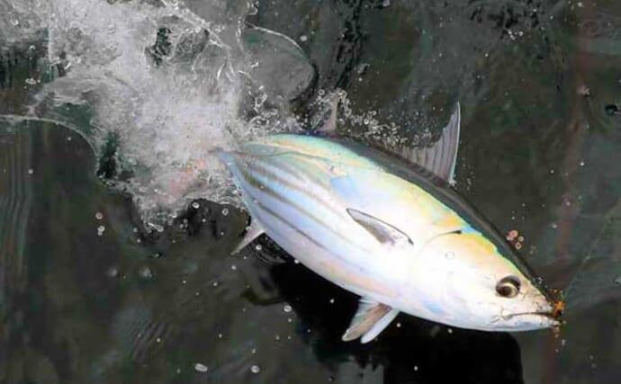 【相模湾2021】キハダマグロ&カツオ解禁 コマセ釣りの基本を解説