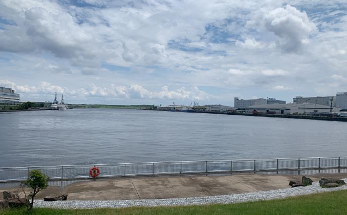福島第一原発の「処理水」でヒラメ飼育実験を実施 風評対策の一環に?