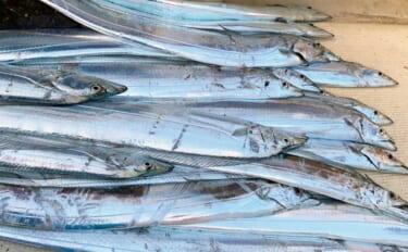 【2021宮城】シーズン突入の夏タチウオ入門:魚サイズ別の取り込み方