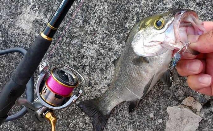 ライトショアジギング(LSJ)で釣り入門:投げる&タダ巻きだけでOK