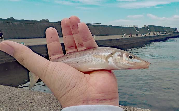 堤防ファミリーフィッシングで魚種多彩 100均ジグでワカシも手中