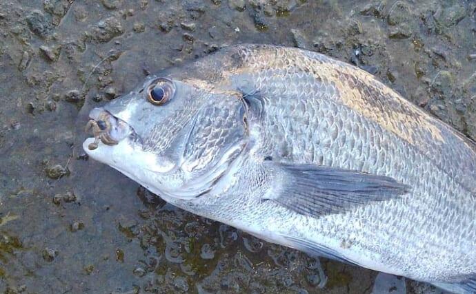 リバーチニングで45cm頭にバイト連発 見えてる魚を狙い撃ち【熊本】