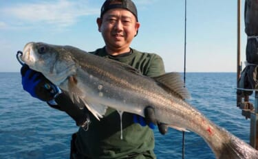 【福井】沖釣り最新釣果 プラッギングで70cm超えシーバス顔出し