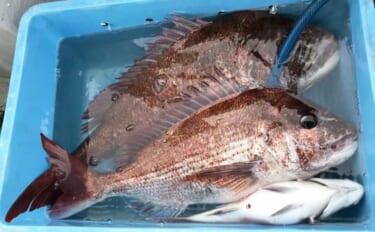 釣りビギナーが「魚の王様」マダイを釣るために:代表的な3つの釣法