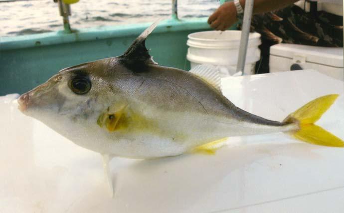 船キス釣りで20cm頭に本命60匹 アジ・サバ・ギマとゲストも賑やか