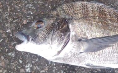 見え魚狙ったチニングで連発 誰でも簡単にできる『コロポチャ』とは?