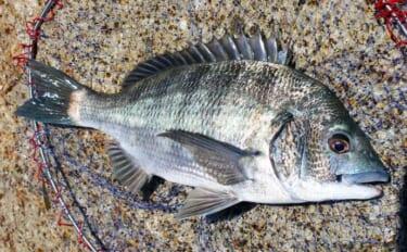「山本太郎」の好釣果へのターニングポイント:渚釣りで43cm手中