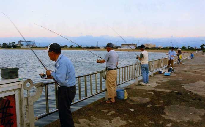 早朝の短時間サビキ釣りで4魚種キャッチ【三重・白子漁港釣り桟橋】