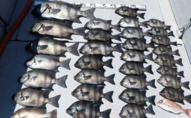 【愛知・三重】沖のエサ釣り最新釣果 60cm4.4kg頭にイシダイ30匹