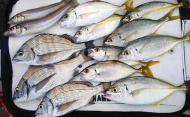 人気岸壁でフカセ釣り 本命クロダイほか嬉しいゲストのシマアジ登場