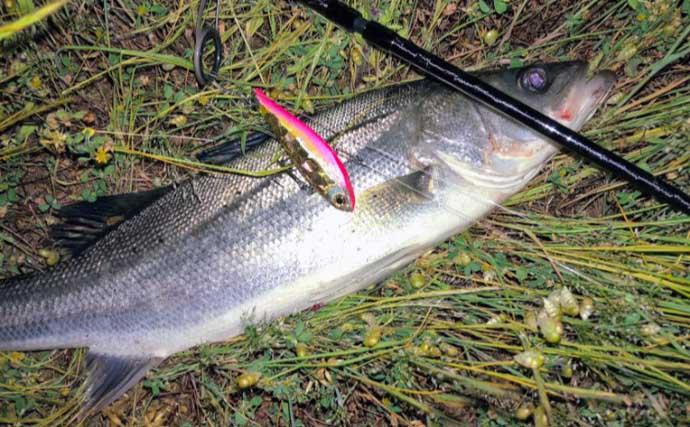 夏の信濃川でシーバスを釣る方法:使用するルアー種類と有効な使い方