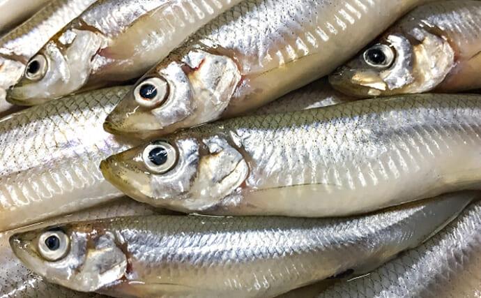 諏訪湖のワカサギ漁は回復途上 「食用」ではなく「採卵用」がメイン?
