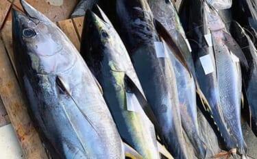 相模湾キハダマグロ釣りの新潮流『エビング』を初心者向けに解説