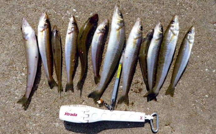 夜の投げキス釣りで26.5cm頭に12尾 ダブルヒット頻発で快引を堪能
