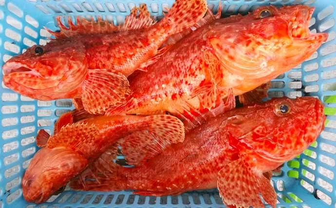 【石川・福井】沖釣り最新釣果 高級底物狙いで良型オニカサゴ数釣り成功